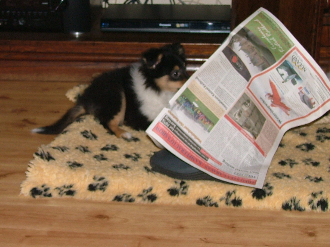 Time to read the Newspaper